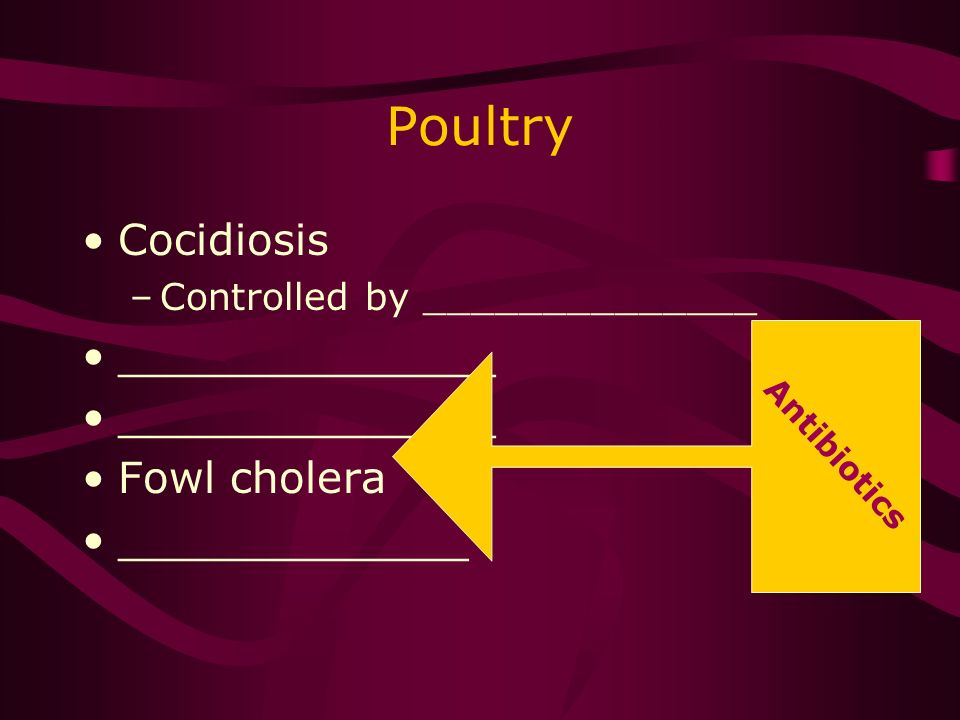 Poultry Cocidiosis –Controlled by ______________ ______________ Fowl cholera _____________ Antibiotics