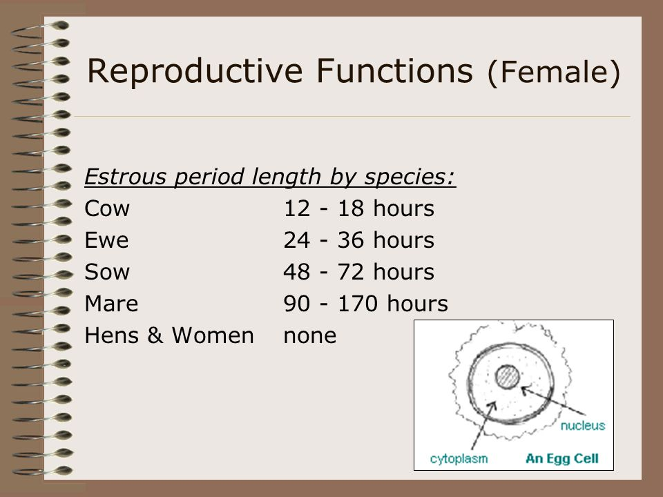 Reproductive Functions (Female) Gestation and Lactation Periods: SpeciesGestation PeriodLactation(Milking) Cow275 - 285 daysbeef 180 - 270 days dairy