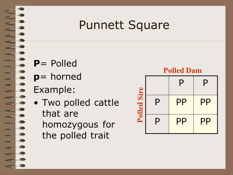 Predicting Genotype Genotype-kind of gene pairs possessed Phenotype- the physical appearance of an animal Punnett squares are used to predict genotype