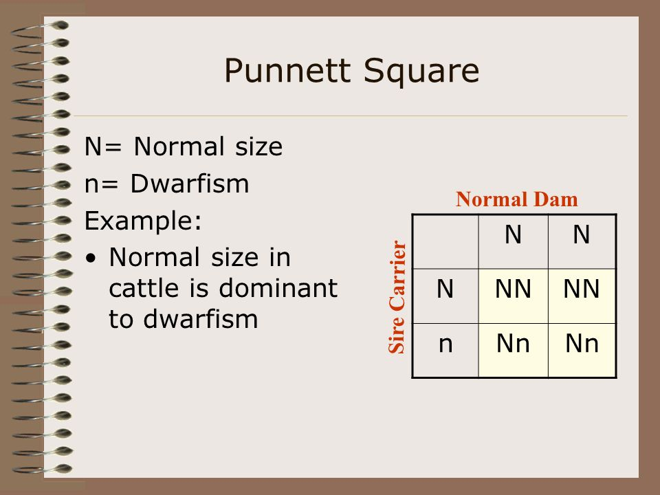 Punnett Square P= Polled p= horned Example: Two polled cattle that are homozygous for the polled trait PP PPP P Polled Dam Polled Sire