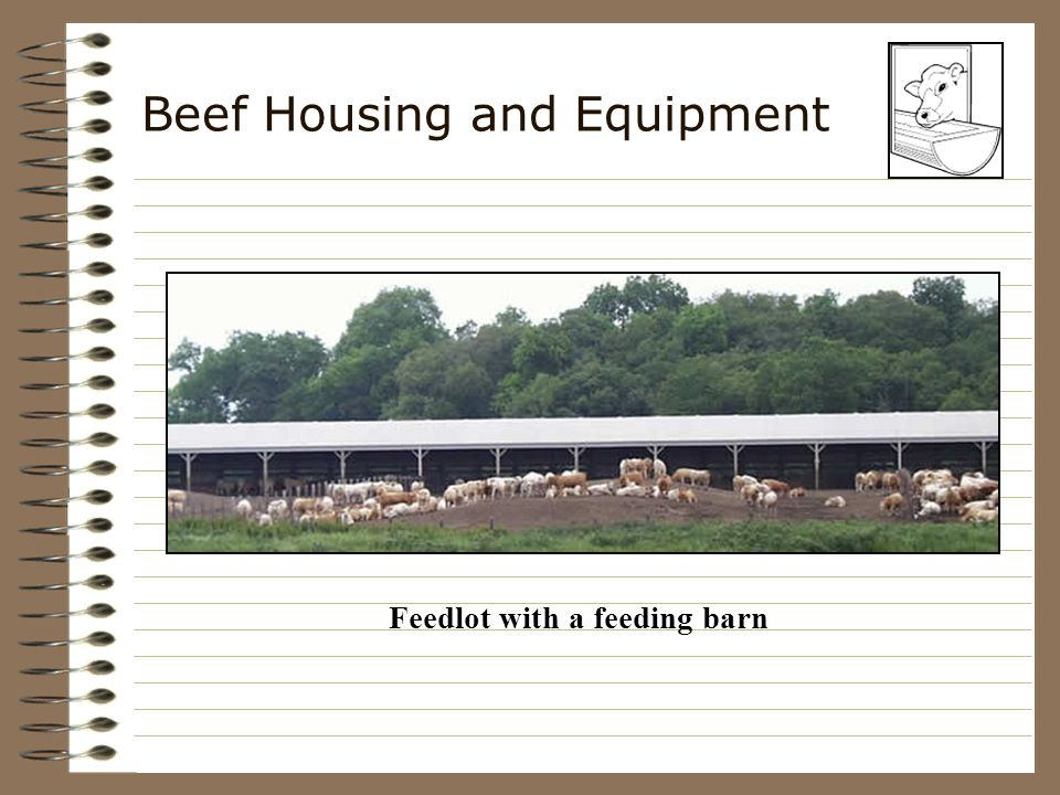 Beef Housing and Equipment ___________ –Needed for all __________ of beef cattle enterprises –Holding pen, working chute and headgate easier to ___________ reduces _________ saves ___________ reduces ___________ safer for the _______________ and cattle