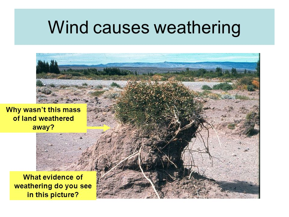Wind causes weathering What evidence of weathering do you see in this picture? Why wasnt this mass of land weathered away?