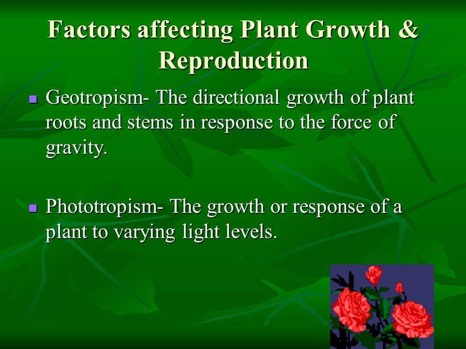 Factors affecting Plant Growth & Reproduction Geotropism- The directional growth of plant roots and stems in response to the force of gravity. Geotrop