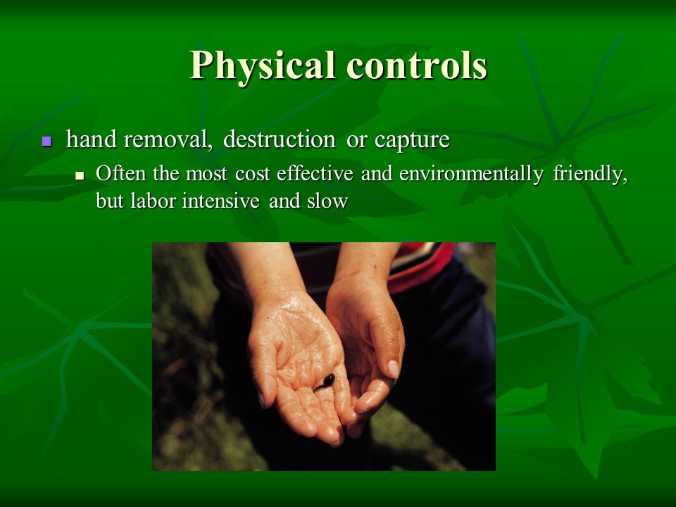 Physical controls hand removal, destruction or capture hand removal, destruction or capture Often the most cost effective and environmentally friendly