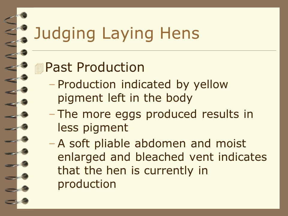 Judging Laying Hens 4 Past Production –Production indicated by yellow pigment left in the body –The more eggs produced results in less pigment –A soft