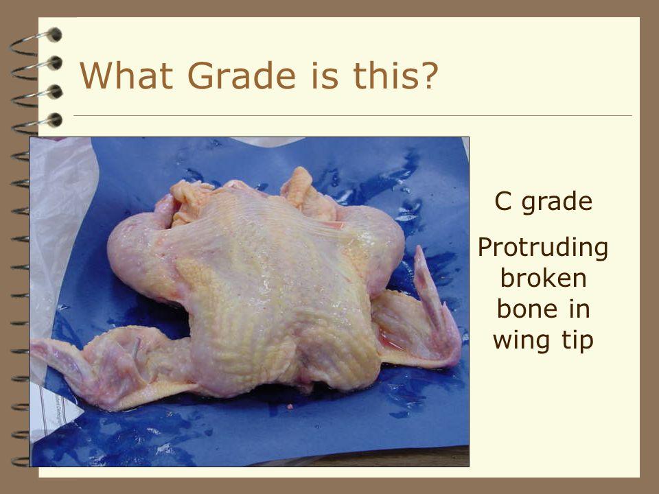 C grade Protruding broken bone in wing tip What Grade is this