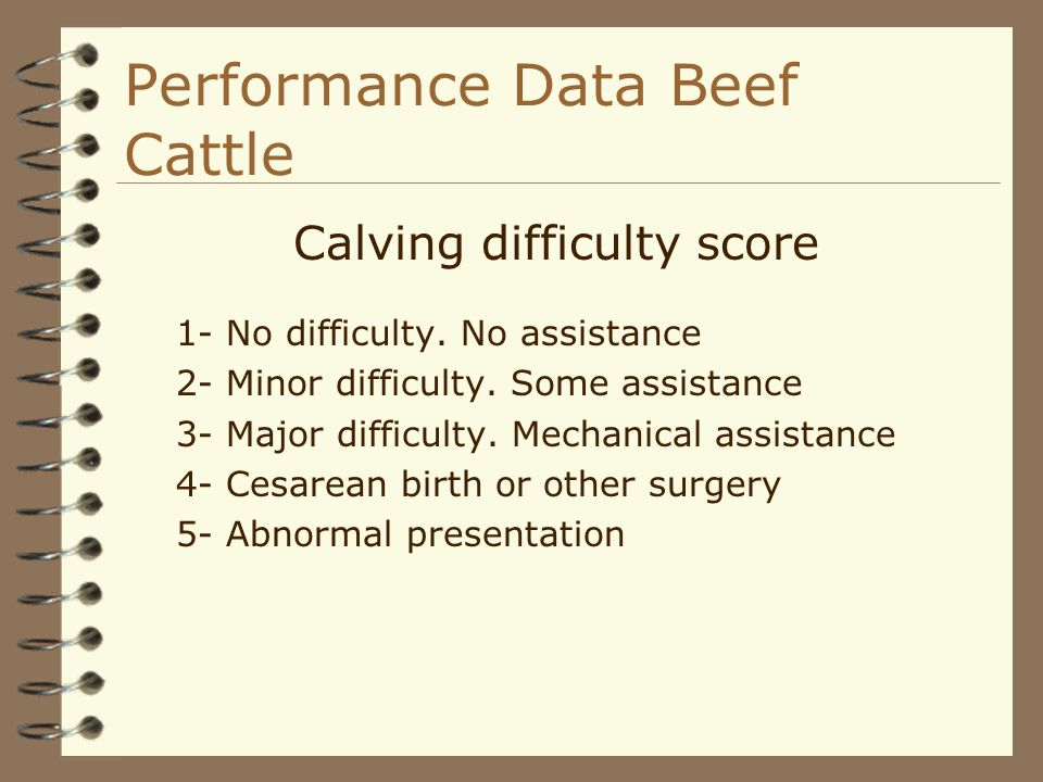 Performance Data Beef Cattle Calving difficulty score 1- No difficulty. No assistance 2- Minor difficulty. Some assistance 3- Major difficulty. Mechan