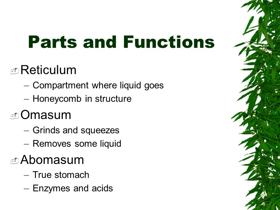 Parts and Functions Reticulum –Compartment where liquid goes –Honeycomb in structure Omasum –Grinds and squeezes –Removes some liquid Abomasum –True s