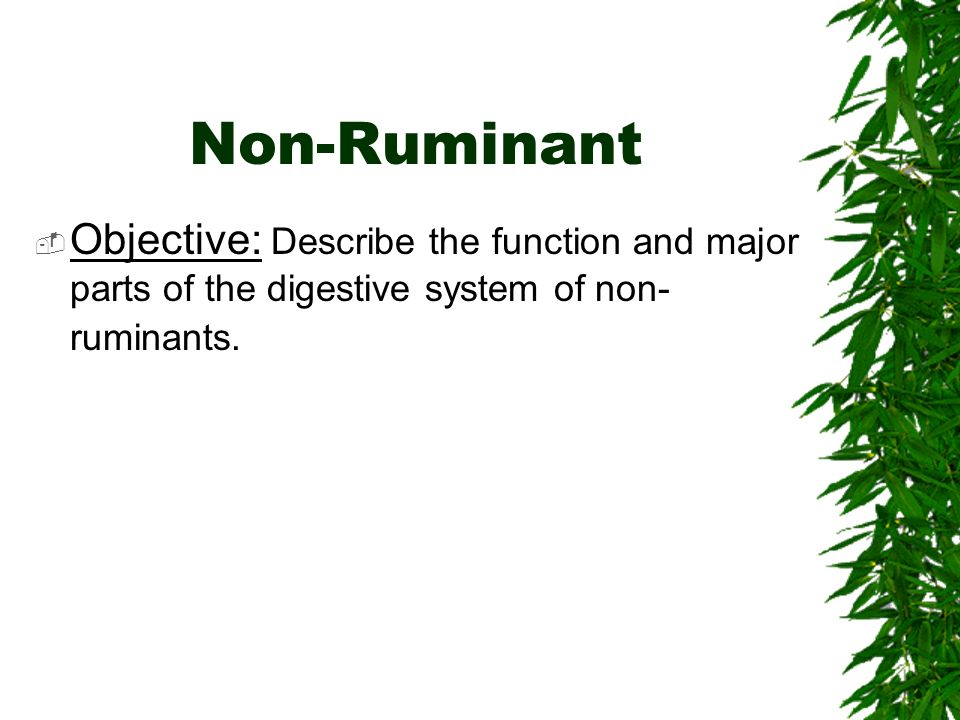 Non-Ruminant Objective: Describe the function and major parts of the digestive system of non- ruminants.