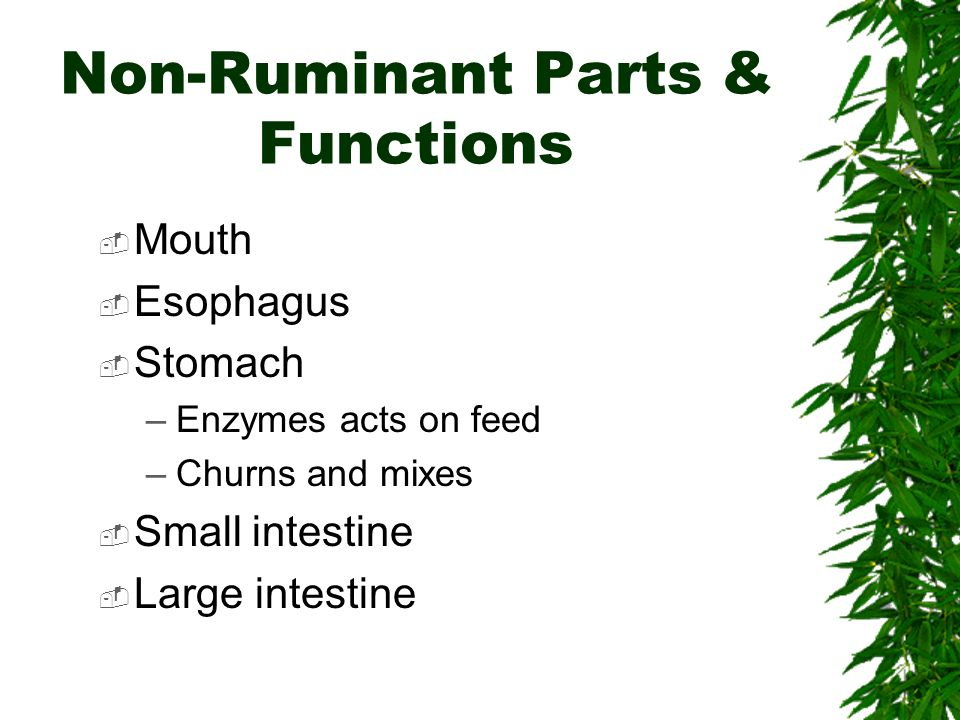 Non-Ruminant Parts & Functions Mouth Esophagus Stomach –Enzymes acts on feed –Churns and mixes Small intestine Large intestine