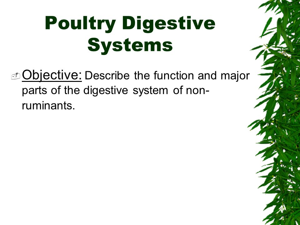 Poultry Digestive Systems Objective: Describe the function and major parts of the digestive system of non- ruminants.
