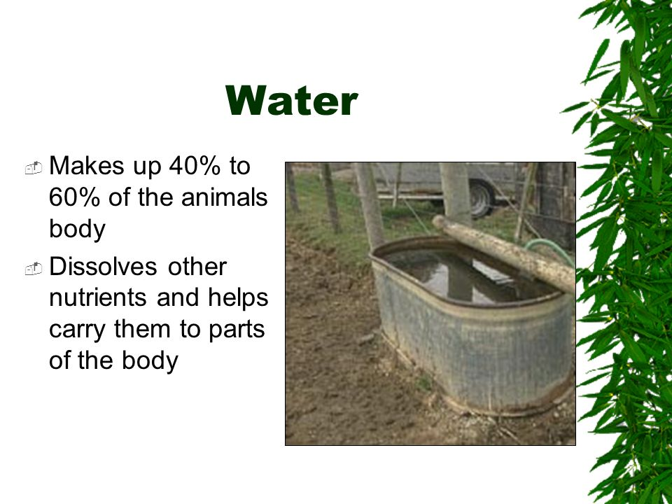 Water Makes up 40% to 60% of the animals body Dissolves other nutrients and helps carry them to parts of the body