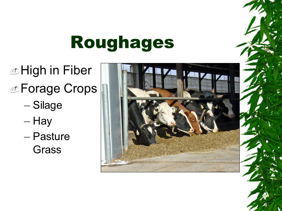 Roughages High in Fiber Forage Crops –Silage –Hay –Pasture Grass