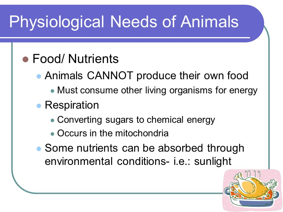 Physiological Needs of Animals Food/ Nutrients Animals CANNOT produce their own food Must consume other living organisms for energy Respiration Conver
