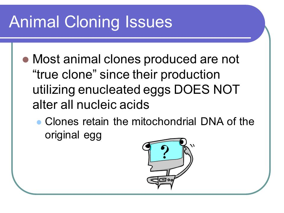 Animal Cloning Issues Most animal clones produced are not true clone since their production utilizing enucleated eggs DOES NOT alter all nucleic acids