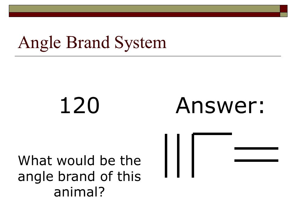 Angle Brand System What would be the angle brand of this animal? Answer:120