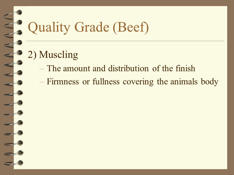 Quality Grade (Beef) 2) Muscling –The amount and distribution of the finish –Firmness or fullness covering the animals body