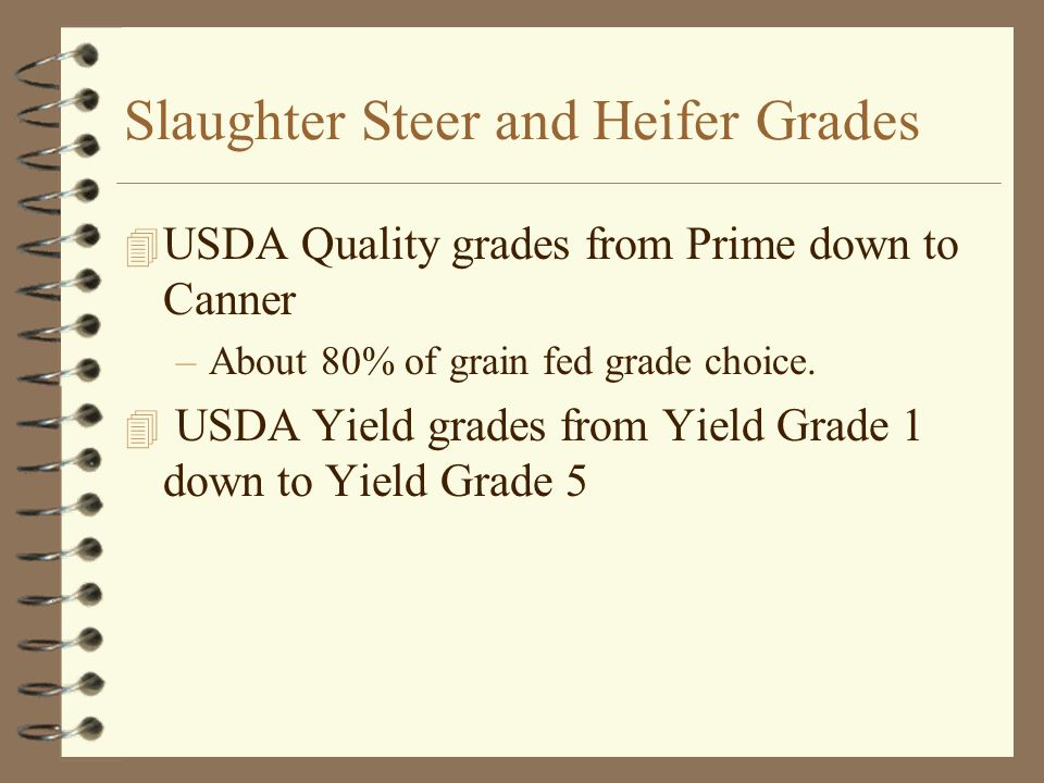 Slaughter Steer and Heifer Grades 4 USDA Quality grades from Prime down to Canner –About 80% of grain fed grade choice. 4 USDA Yield grades from Yield