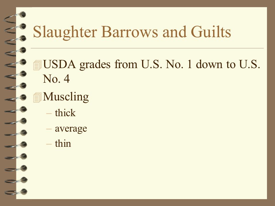 Slaughter Barrows and Guilts 4 USDA grades from U.S. No. 1 down to U.S. No. 4 4 Muscling –thick –average –thin