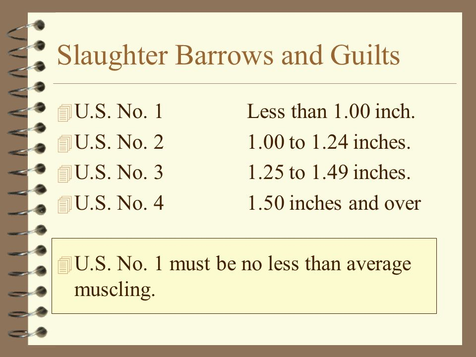 Slaughter Barrows and Guilts 4 U.S. No. 1 Less than 1.00 inch. 4 U.S. No. 2 1.00 to 1.24 inches. 4 U.S. No. 3 1.25 to 1.49 inches. 4 U.S. No. 4 1.50 i