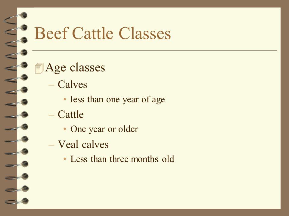 Feeder Steer and Heifer Grades 4 USDA Number 1, 2 and 3 4 Each USDA Grade has: –Large Frame –Medium Frame –Small Frame
