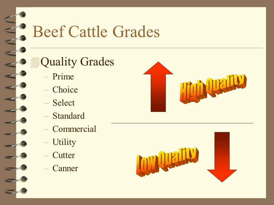 Beef Cattle Grades 4 Yield Grades –Yield Grade 1 –Yield Grade 2 –Yield Grade 3 –Yield Grade 4 –Yield Grade 5