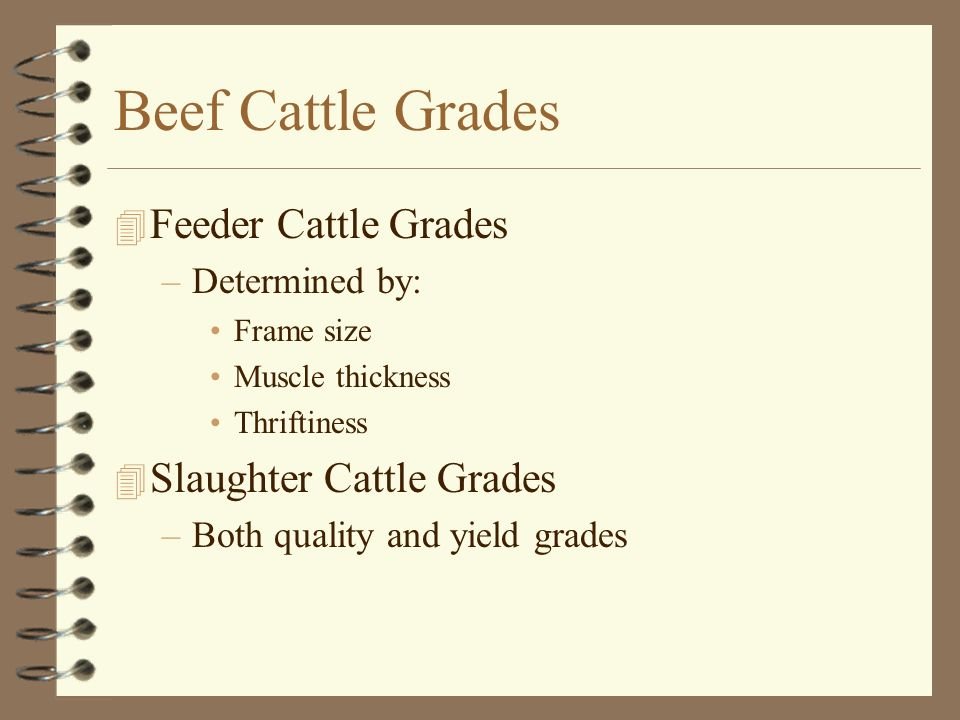 Beef Cattle Grades 4 Feeder Cattle Grades –Determined by: Frame size Muscle thickness Thriftiness 4 Slaughter Cattle Grades –Both quality and yield gr