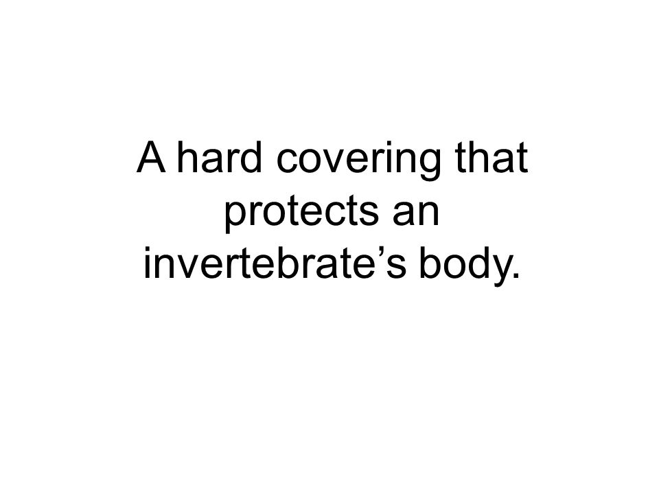 A hard covering that protects an invertebrates body.