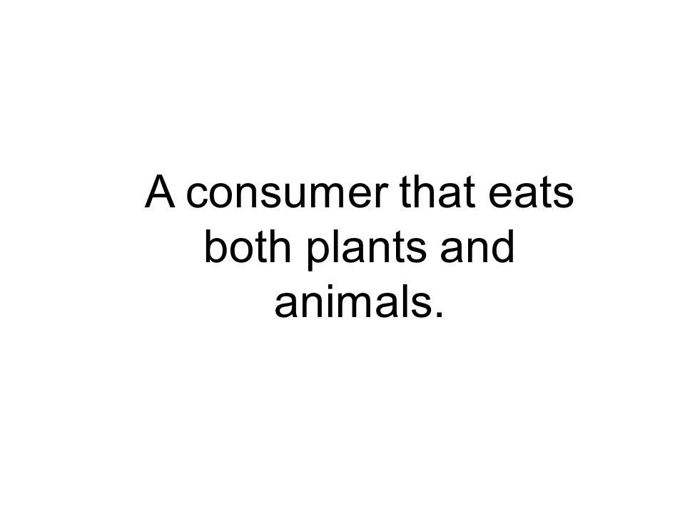 A consumer that eats both plants and animals.