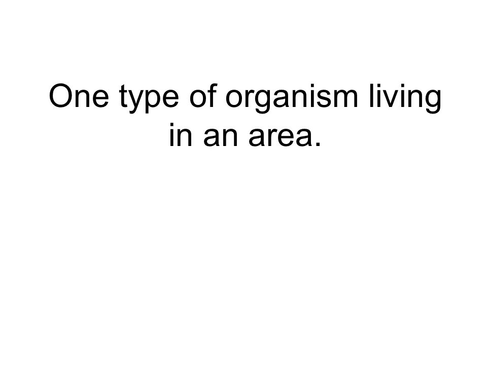 One type of organism living in an area.
