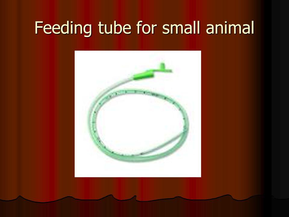 Feeding tube for small animal