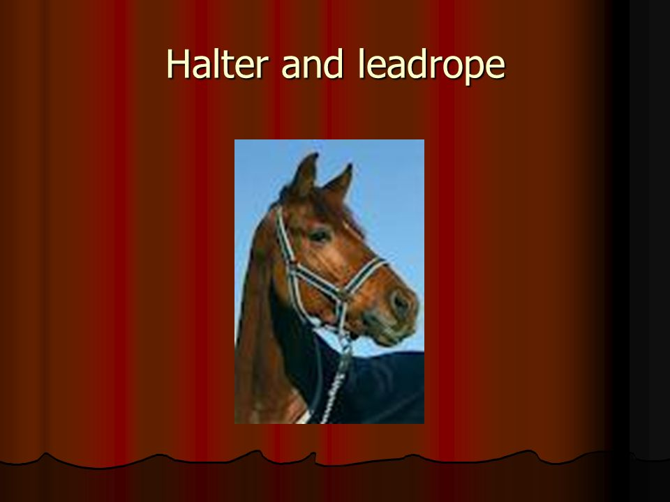 Halter and leadrope