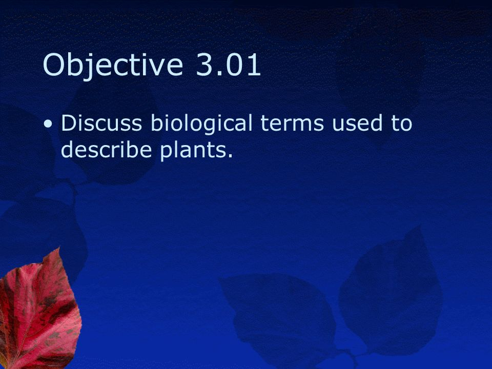 Plant Physiology Essential Standard 3.00: Summarize Plant Anatomy