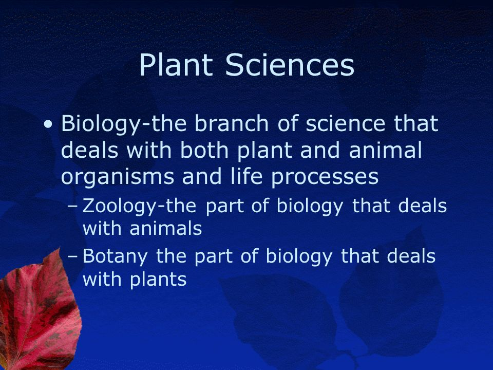 Objective 3.01 Discuss biological terms used to describe plants.