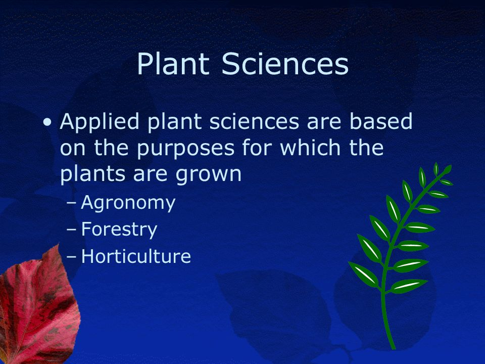 Plant Sciences Biology-the branch of science that deals with both plant and animal organisms and life processes –Zoology-the part of biology that deal