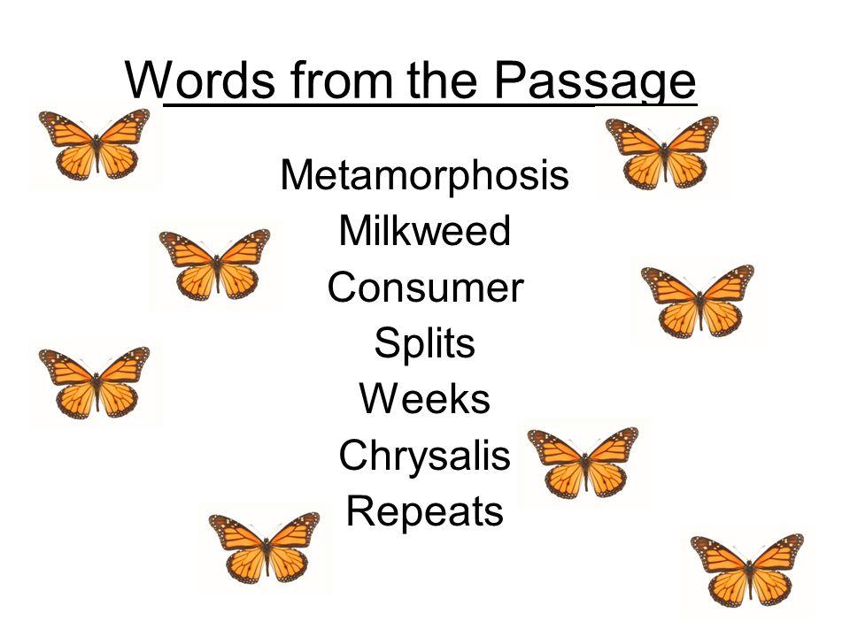 Words from the Passage Metamorphosis Milkweed Consumer Splits Weeks Chrysalis Repeats