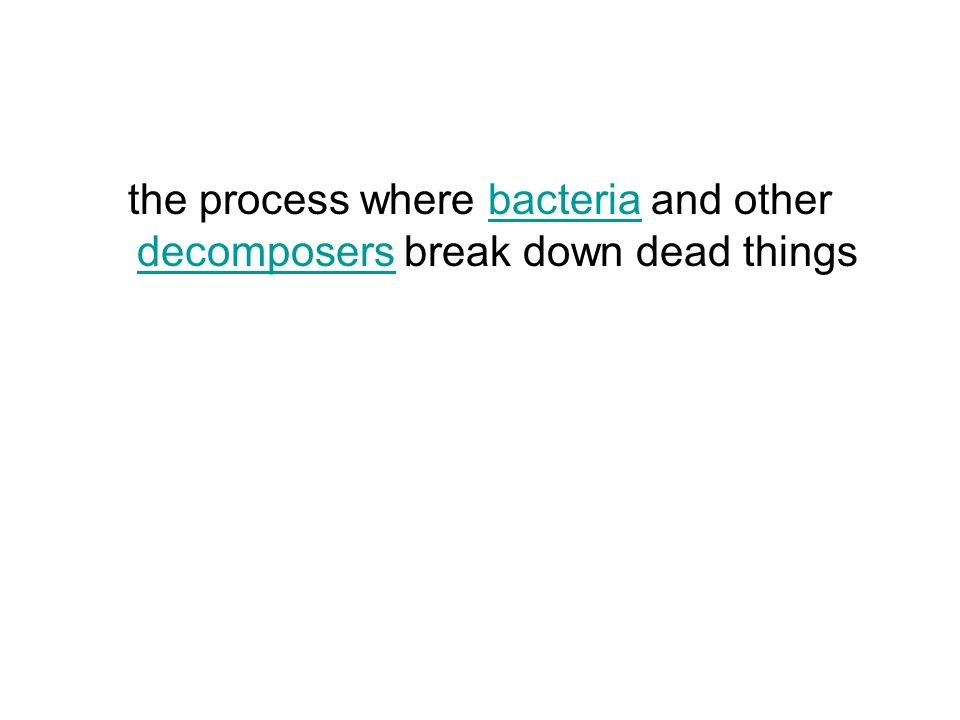 the process where bacteria and other decomposers break down dead thingsbacteria decomposers