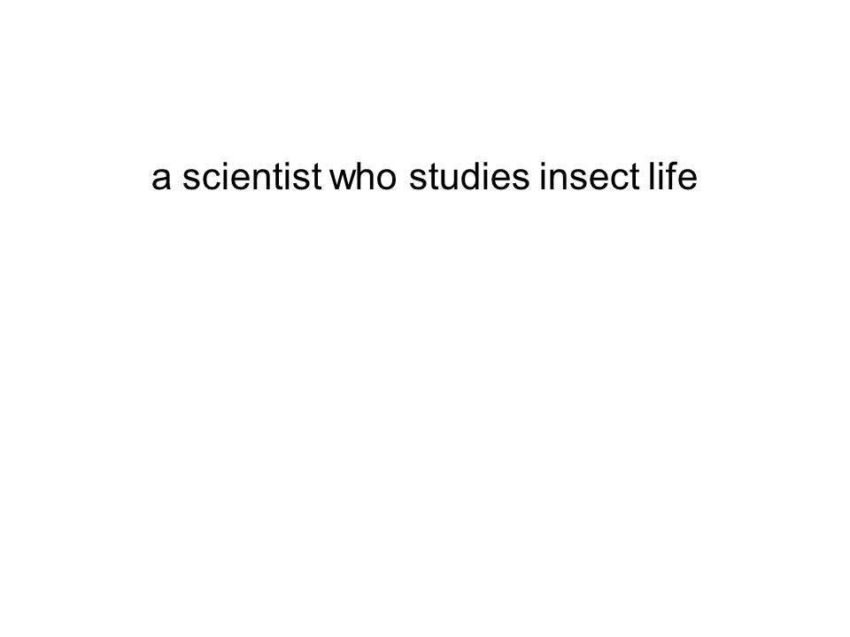 a scientist who studies insect life