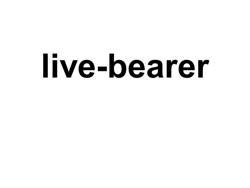 live-bearer