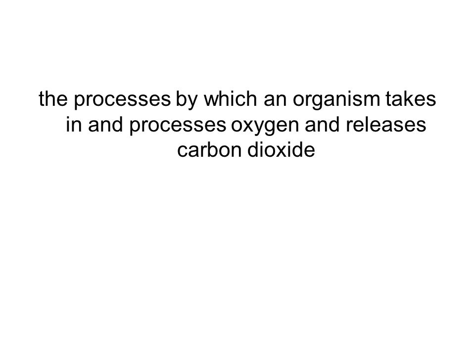 the processes by which an organism takes in and processes oxygen and releases carbon dioxide