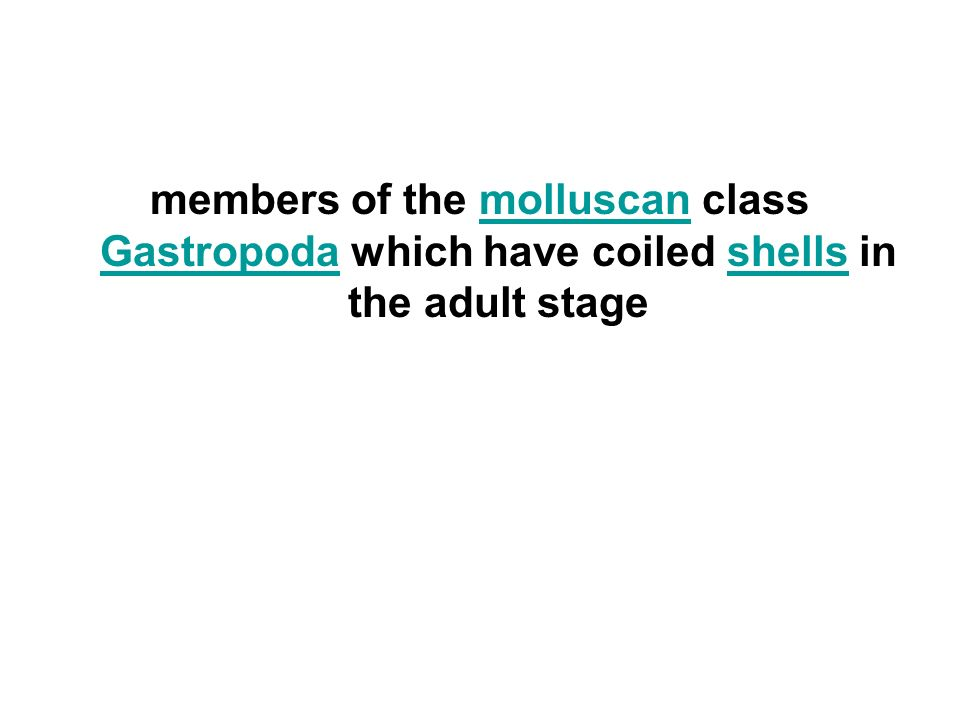 members of the molluscan class Gastropoda which have coiled shells in the adult stagemolluscan Gastropodashells