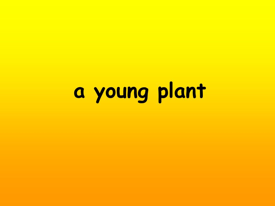 a young plant
