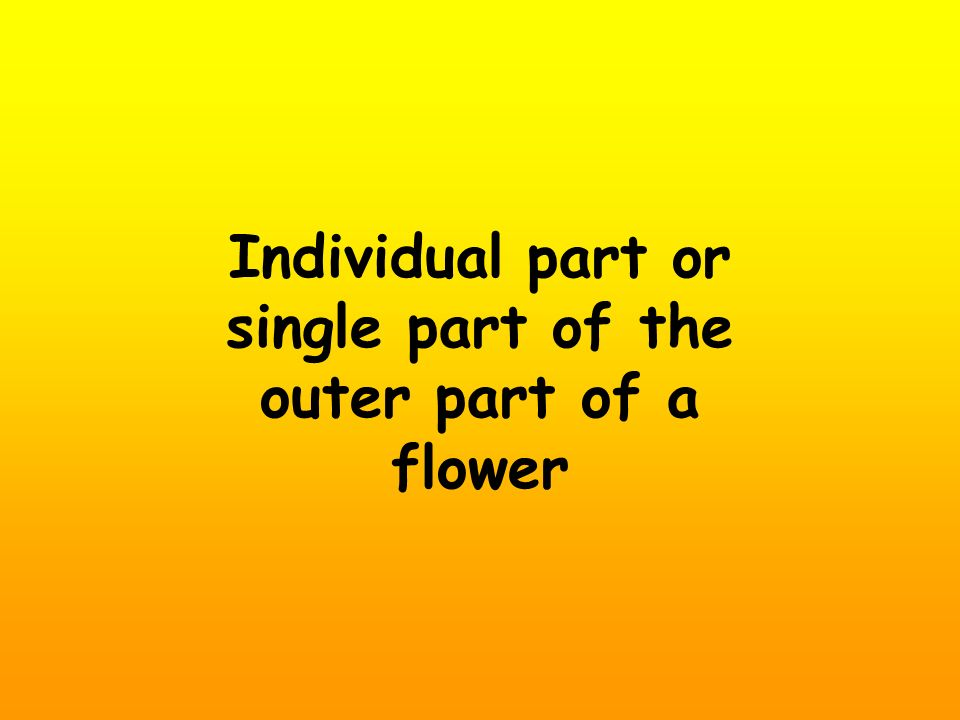 Individual part or single part of the outer part of a flower