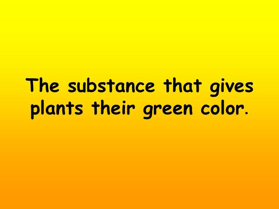 The substance that gives plants their green color.