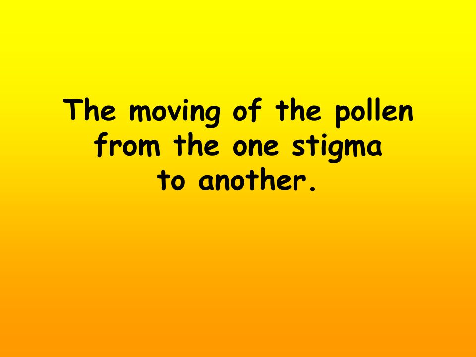 The moving of the pollen from the one stigma to another.