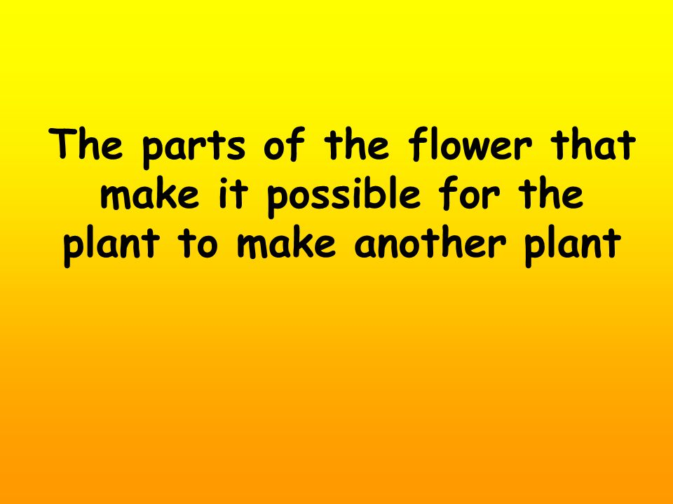 The parts of the flower that make it possible for the plant to make another plant