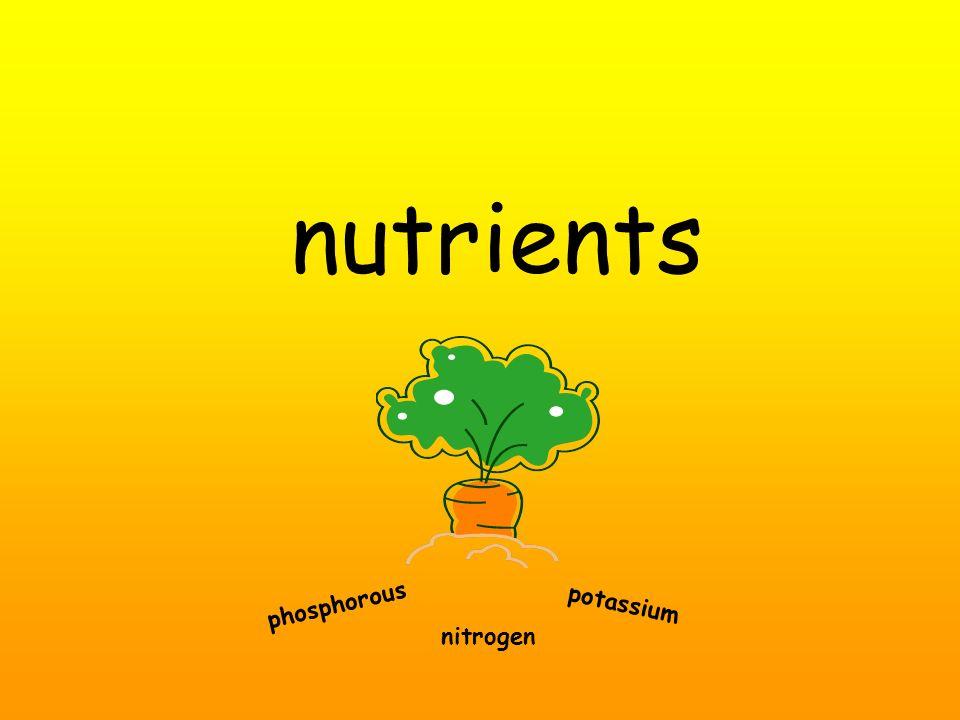 nutrients phosphorous nitrogen potassium
