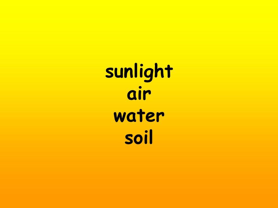 sunlight air water soil