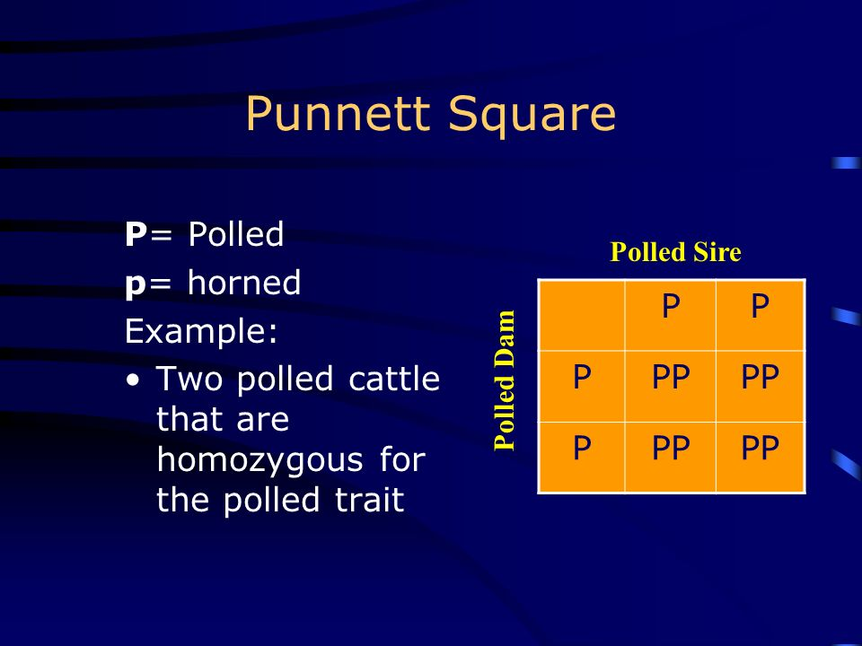 Punnett Square Used to __________ the results of crossing animals –Male __________ are shown across the ______ –__________ gametes are shown down the