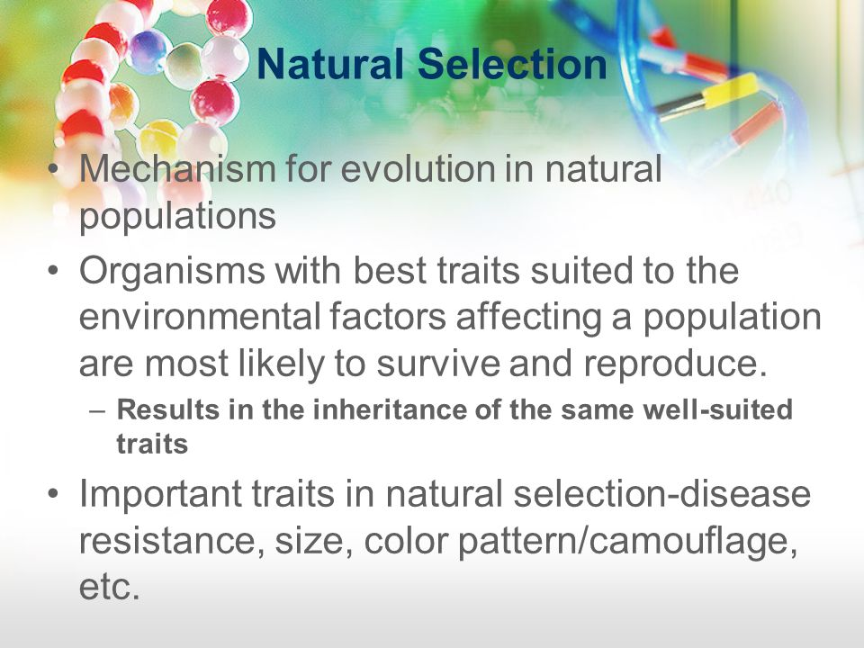 Natural Selection Mechanism for evolution in natural populations Organisms with best traits suited to the environmental factors affecting a population